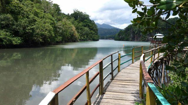 Mangrove Ecosystem Tour