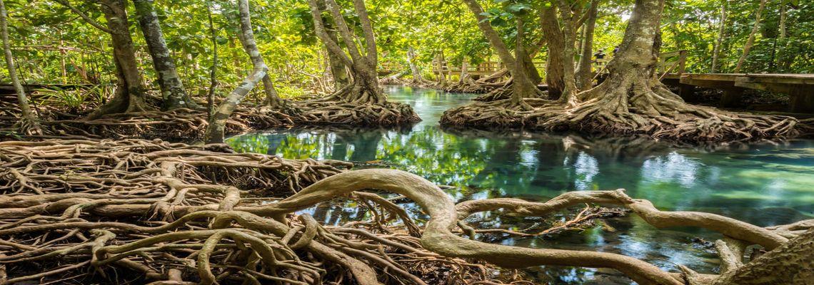 5<sup>th</sup> International Mangrove, Macrobenthos & Management Conference