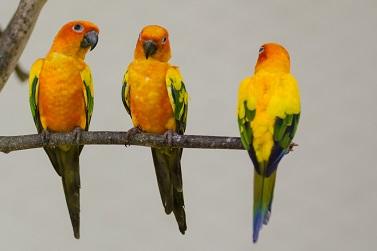 KL Bird Park
