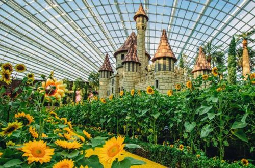 2018 10 Sunflower Surprise at Gardens by the Bay FI