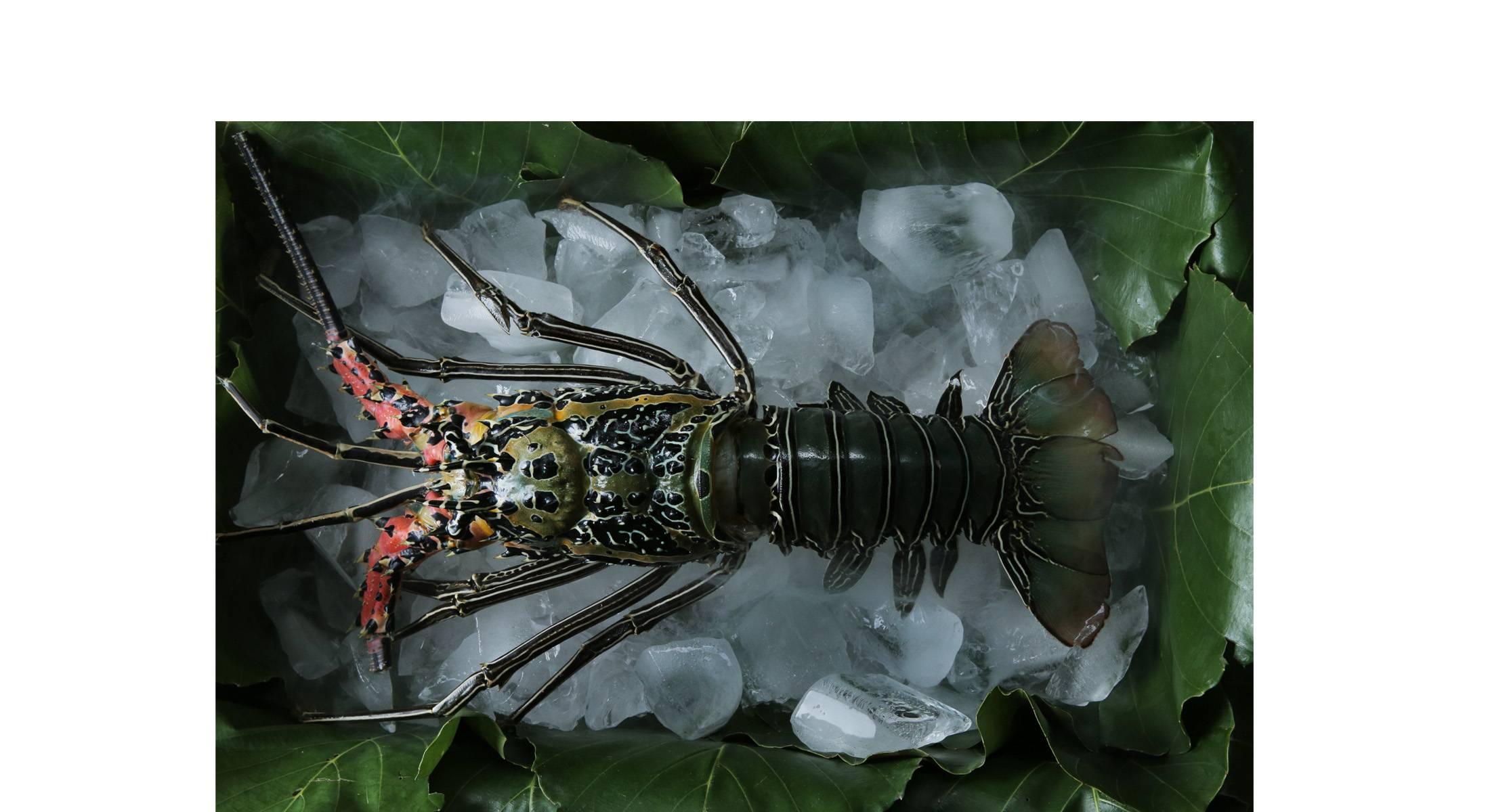 homepage-lobster-coba